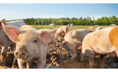 Field Technical Service Manager (Swine) | Netherlands