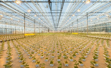 Accountmanager Horticulture Benelux